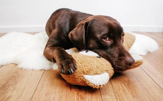 Прогнозы при вздутии живота у собак