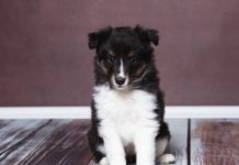 Первые 30 дней с вашим новым щенком