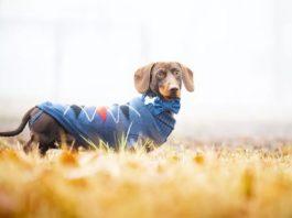 Как правильно снять мерки с собаки для одежды и амуниции