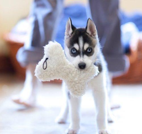 Размышляете о правильности ухода за собакой? Не уверенны на 100% верно ли Вы ухаживаете за питомцем? У нас уже собрались ответы, на все волнующие Вас вопросы.