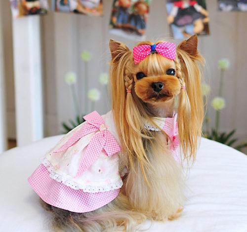 Всегда мечтали о собаке, но не уверенны в правильности выбора породы друга?  Что же не беда! На нашем сайте, Вы найдете много информации, о всех породах маленьких собак.